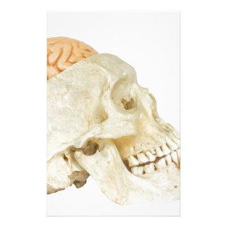Papeterie Crâne humain avec des cerveaux