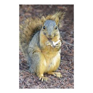 Papeterie Écureuil affamé heureux