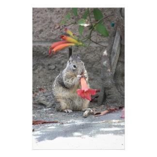Papeterie Écureuil affectueux de fleur