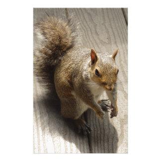 Papeterie Écureuil de Brown