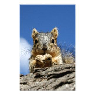 Papeterie Écureuil de Sammy et le ciel bleu