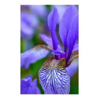 Papeterie Iris barbu