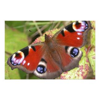 Papeterie Joli papillon de paon