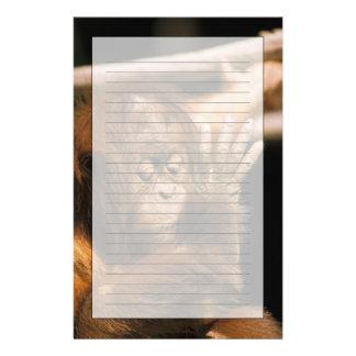 Papeterie Le Bornéo. Orang-outan captif, ou pongo pygmaeus.