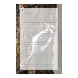 Papeterie Mâle velu de pivert sur l'arbre de tremble, Teton