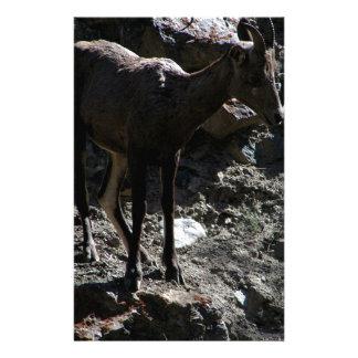 Papeterie Mouflons d'Amérique de montagne rocheuse, brebis