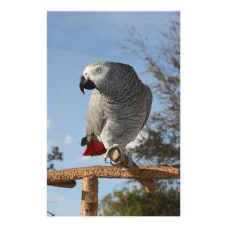 Papeterie Perroquet renversant de gris africain