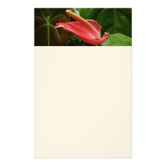 Papeterie Photographie florale élégante de zantedeschia rose