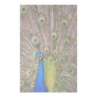 Papeterie Plumes d'animal de faune d'oiseau de paon