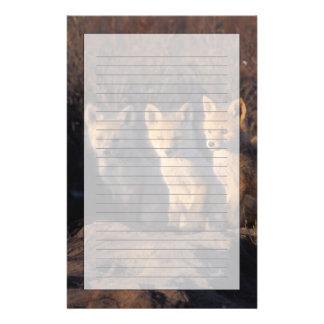 Papeterie renard rouge, vulpes de Vulpes, kits en dehors de