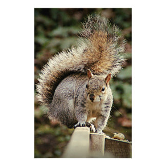 Papeterie Une queue d'écureuils