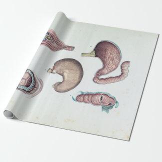 Papier Cadeau Anatomie vintage de la bouche et de l'estomac