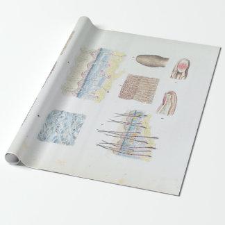 Papier Cadeau Anatomie vintage de la peau et des ongles de