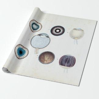 Papier Cadeau Anatomie vintage de l'oeil humain