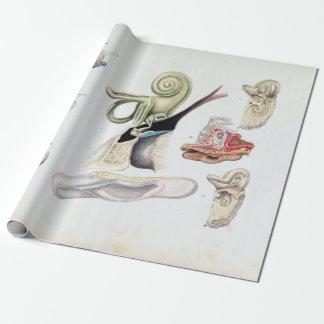 Papier Cadeau Anatomie vintage de l'oreille humaine