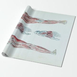 Papier Cadeau Anatomie vintage des jambes et des pieds humains