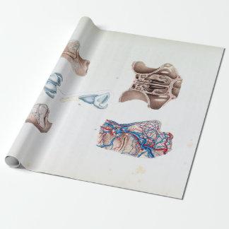 Papier Cadeau Anatomie vintage du nez et des sinus humains