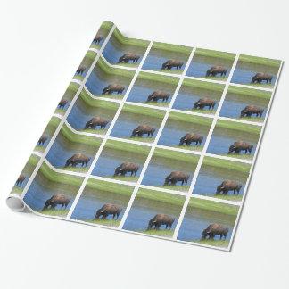Papier Cadeau Bison de Yellowstone buvant dans le lac