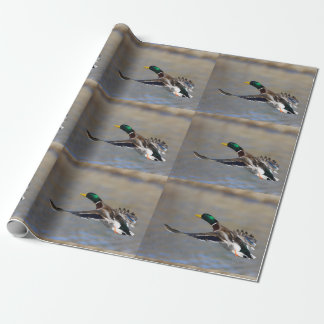 Papier Cadeau canard en vol