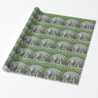 Papier Cadeau Collection de coyote