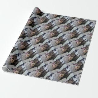 Papier Cadeau Collection de Kitty