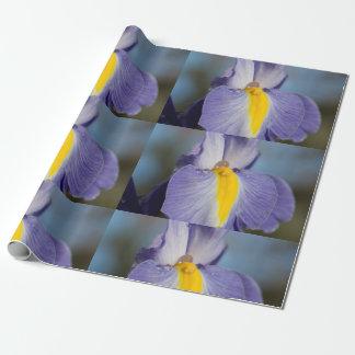 Papier Cadeau Gouttes de pluie sur un iris pourpre et jaune