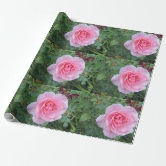 Papier Cadeau La floraison assez rose s'est levée