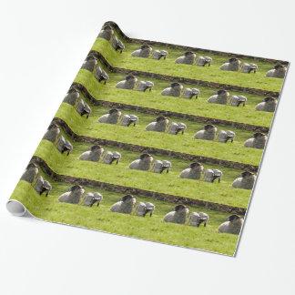 Papier Cadeau Moutons avec des agneaux de ressort