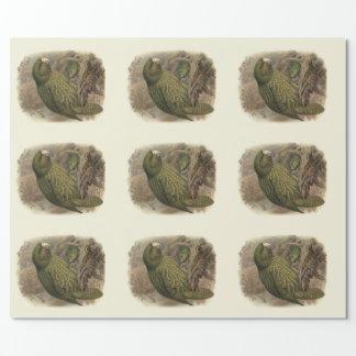 Papier Cadeau Oiseaux vintages de NZ de la Science - Kakapo