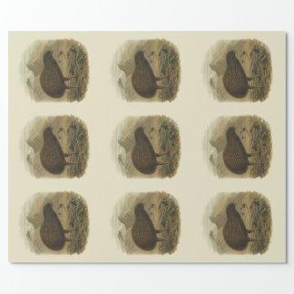 Papier Cadeau Oiseaux vintages de NZ de la Science - kiwi