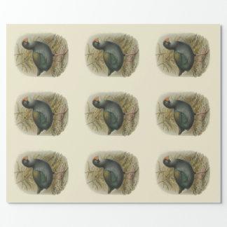 Papier Cadeau Oiseaux vintages de NZ de la Science - Takahe