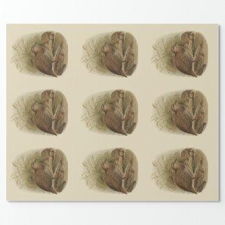 Papier Cadeau Oiseaux vintages de NZ de la Science - Weka