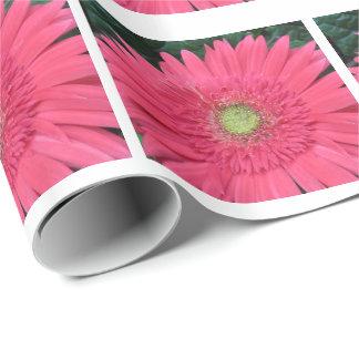 Papier Cadeau Photographie rose de marguerite de Gerbera