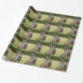 Papier Cadeau Pré de kangourou