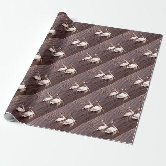 Papier Cadeau Une paire de cygnes sur le lac