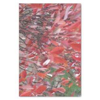 Papier de soie de soie coloré