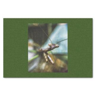 Papier de soie de soie comportant M. Mantis