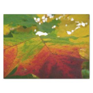 Papier Mousseline Couleurs de la photographie de nature d'automne de