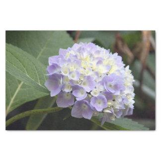 Papier Mousseline Hortensia bleu 7636