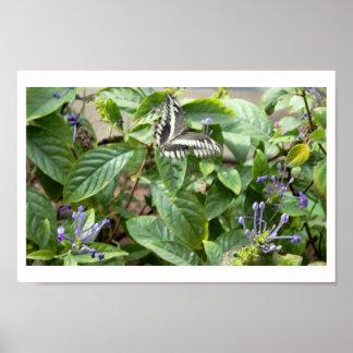 Papillon blanc noir sur le plante poster