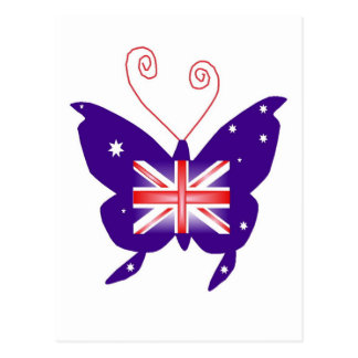 Papillon britannique de diva