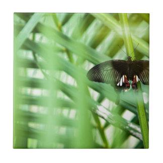 papillon Cambodge Carreau