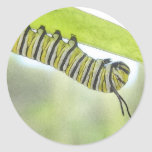 Papillon de monarque Caterpillar explorant un Autocollant Rond