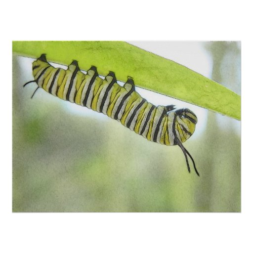 Papillon de monarque Caterpillar explorant un Milk Poster