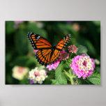 Papillon de monarque sur la fleur de Lantana Poster
