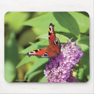 Papillon de paon sur la photo de buddleia tapis de souris