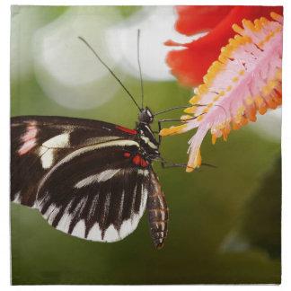 Papillon de Papilio Rumanzovia Serviettes De Table