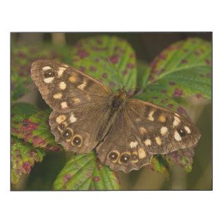 Papillon en bois tacheté