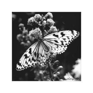 Papillon noir et blanc toiles
