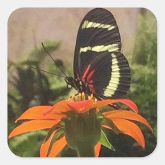 Papillon sur des autocollants de fleur